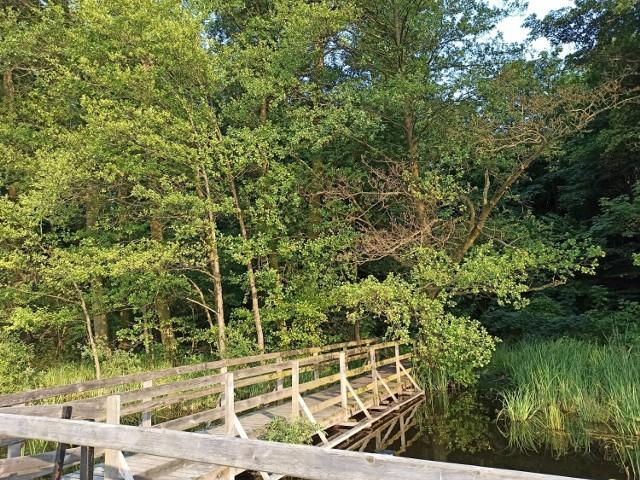 Puszcza Bieniszewska znajduje się na liście obszarów chronionych Natura 2000