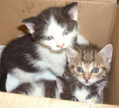 Trzy kotki czekają na nowy, dobry dom.