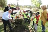 Łódź: posadzą ponad 200 drzew