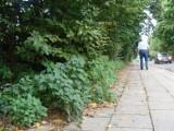 Chwasty zarastają osiedle Błonie