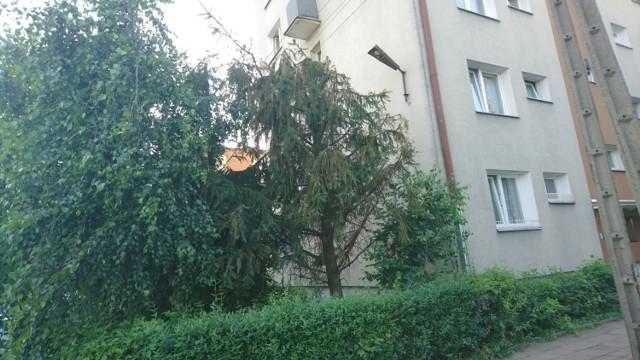 Spółdzielnia planuje wycinkę drzew na Tysiącleciu