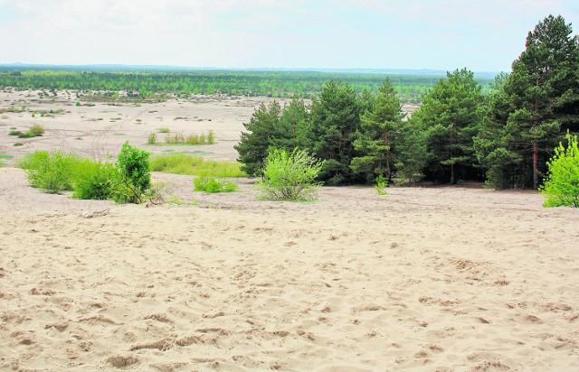 Od strony Chechła widać jeszcze łachy piachu. Reszta,  ponad  30 km kwadratowych, to zarośla