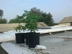 Ludwin: Marihuana na dachu autobusu