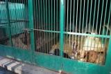 Leszno: Schronisko dla psów będzie kosztowało prawie dwa miliony złotych