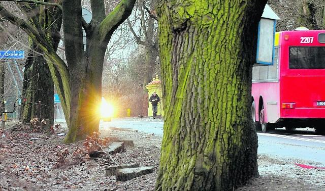 Lublin: W 2011 roku ratusz zgodził się na wycinkę 4991 drzew