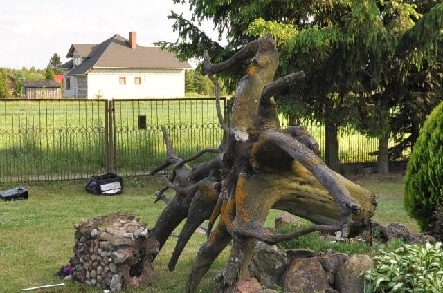 Na 6-latka przewrócił się pień drzewa, na którym stała donica.