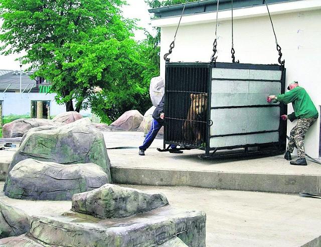 Misie wróciły do zamojskiego zoo