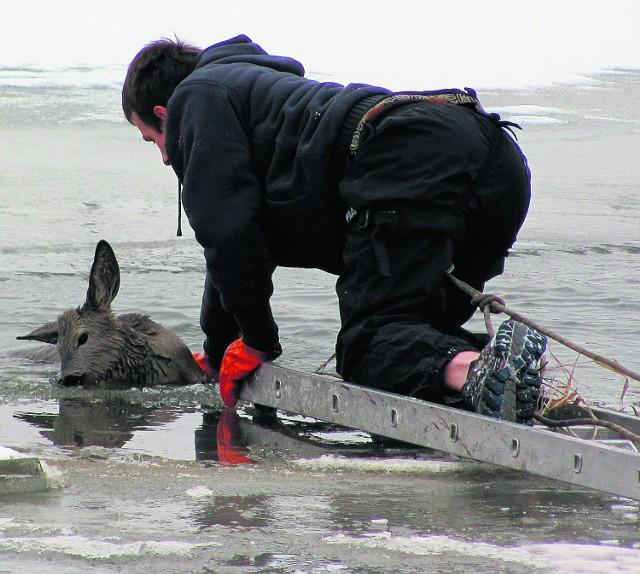 Strażak czołgał się po drabinie, by  ratować zwierzę