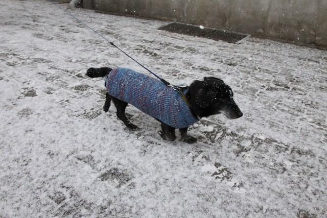 Śnieg w Poznaniu