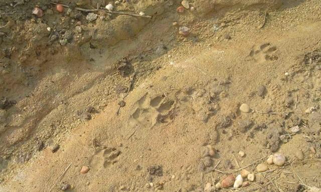 Ślady znalezione pod Kochanowicami