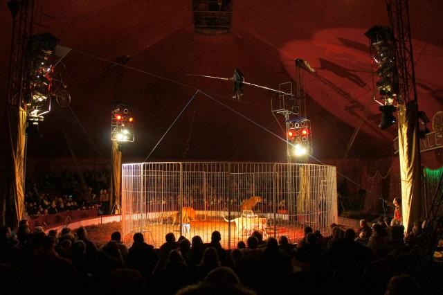 14 i 15 kwietnia artyści Cyrku Zalewski wystąpią w Poznaniu