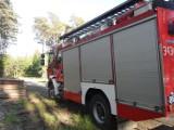 Pożar lasu niedaleko Poddąbia. Interweniowała straż i śmigłowiec (zdjęcia)