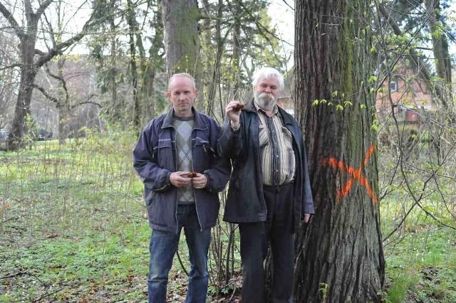 Zdzisław Fota (od lewej) i Tadeusz Pepliński protestują przeciw wycince drzew