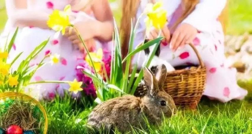 Jaka będzie pogoda na Wielkanoc w Krośnie Odrzańskim i...