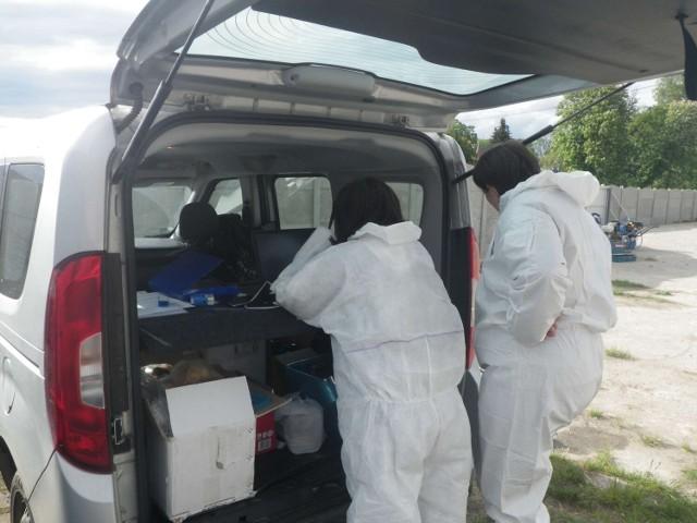 Potwierdzono kolejne przypadki Afrykańskiego Pomoru Świń u dzików w powiecie międzychodzkim (zdjęcia z likwidacji stada trzody chlewnej zakażonej wirusem ASF w Gnuszynie pod koniec maja 2021 roku).