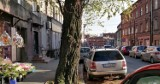 Katowice: Spór o akację przy ul. Markiefki. Urzędnicy nie zgadzają się wycinkę. Mieszkańcy obawiają się, że drzewo się przewróci.