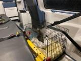 Ambulans dla zwierząt odebrany! Miał już pierwszego pacjenta! [ZDJĘCIA]
