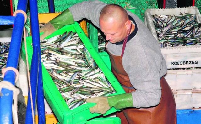 W tym roku polscy rybacy mają do odłowienia 40 tysięcy ton śledzi