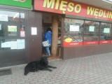 Dziś w południe w samym centrum Skwierzyny zagubił się wspaniały czarny psiak. Może ktoś go szuka?