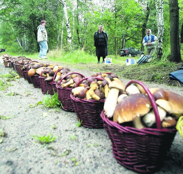 Jak zbierać, to tylko grzyby, których jesteśmy pewni