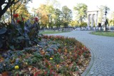 Tarnów. Kolorowa jesień w Tarnowie. Park Strzelecki w promieniach słońca wygląda przepięknie [ZDJĘCIA]