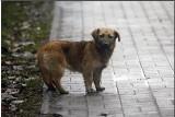 Koniec z bestialskim traktowaniem zwierząt? Posłowie chcą ustawy