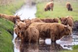 Park Natury Zalewu Szczecińskiego na przepięknych zdjęciach. Tak blisko Goleniowa