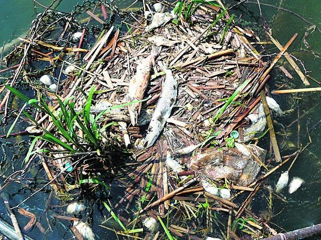 Smród i zdechłe ryby nad Zalewem Zemborzyckim