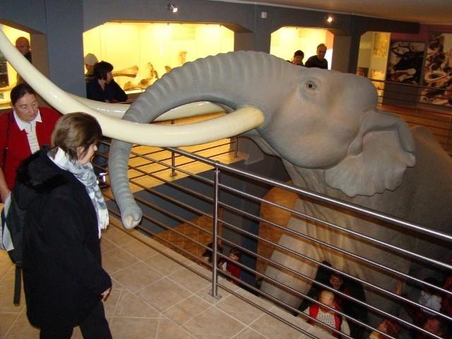 Wielkiego słonia obejrzymy podczas wystawy w konińskim muzeum