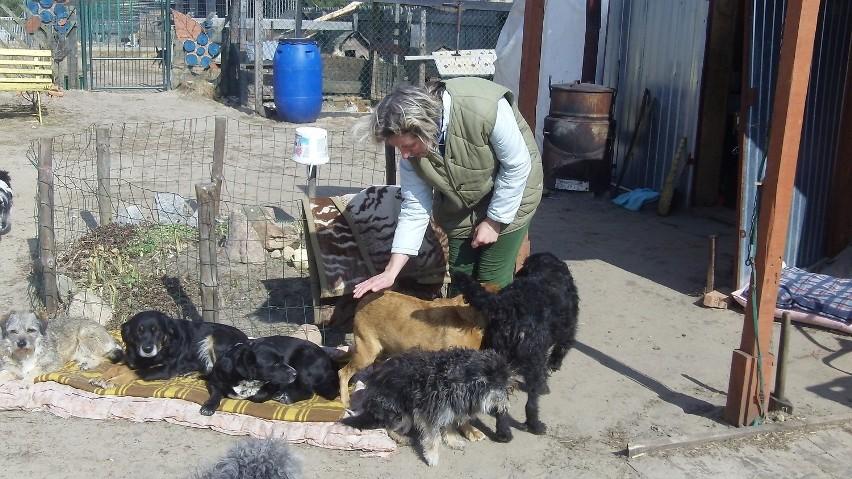 Renata Olszewska z psami w przytulisku