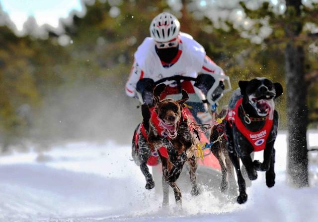 Psy Doda, Era, Nergal i Ozzi pokazały na co je stać! Igor Tracz ze swoimi psami zdobył tytuł mistrza świata