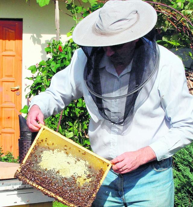 Pszczelarzy martwi pomór owadów. Podejrzewają, że trucizną skażona jest deszczówka