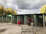 WRZEŚNIA: Schronisko dla zwierząt - tak wygląda w środku! Kto czeka na kochający dom? [GALERIA]