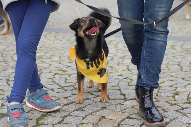 W schronisku dla zwierząt w Skierniewicach można znaleźć wiernego przyjaciela