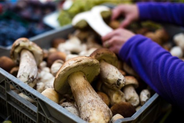 Gdzie wybrać się na grzyby w Małopolsce?
