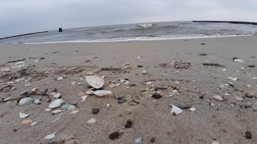 Bałtyk w maju, choć jeszcze lodowaty, zachwyca. Zobaczcie, jak pięknie jest na plaży [ZDJĘCIA]