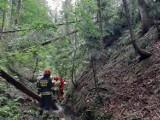 Buczkowice: Tragiczny wypadek w Godziszce. Drzewo w lesie przygniotło drwala. Wołanie o pomoc usłyszała przypadkowa kobieta