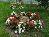 Lublin: Oazy natury pod blokiem. Barwne klomby kwiatowe na Kalinowszczyźnie. Zobacz zdjęcia
