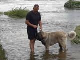 Młody owczarek kaukaski zaginął w Sztumie - czy ktoś widział tego psa? [ZDJĘCIA]