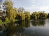 Piękna wiosna w Parku Przyjaźni w Kaliszu ZDJĘCIA