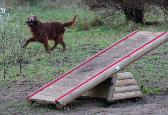 Wybieg dla psów w Kolibkach