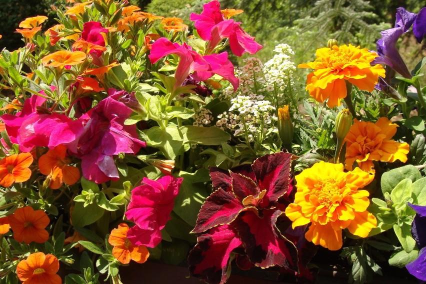 Kwiaty Na Zachodni Balkon Q Housepl