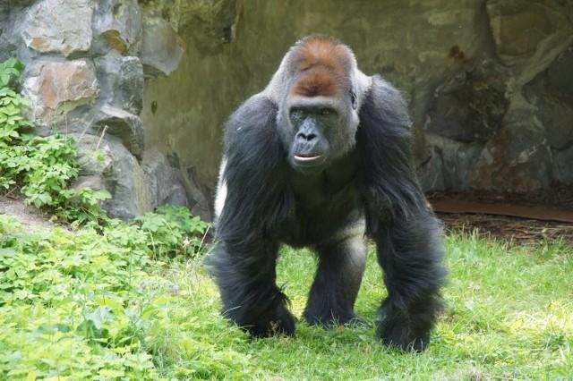 Zdjęcia z wizyty w zoo oraz z Testu Coopera