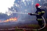 Wielkopolska: 5 najczęstszych przyczyn letnich pożarów. Jak im zapobiegać?