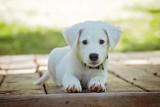 Dziś Dzień Psa. Jak zapewnić pupilowi opiekę podczas naszej nieobecności? Gdzie w Rzeszowie i okolicy adoptować psa?
