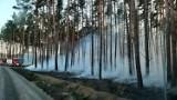 Wzrasta zagrożenie pożarowe w naszych lasach - bądźcie ostrożni