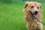 Psy do adopcji ze schroniska dla zwierząt w Bełchatowie