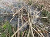 Spalanie odpadów zielonych w Rybniku kosztuje 500 złotych. Wpadł mieszkaniec Zamysłowa