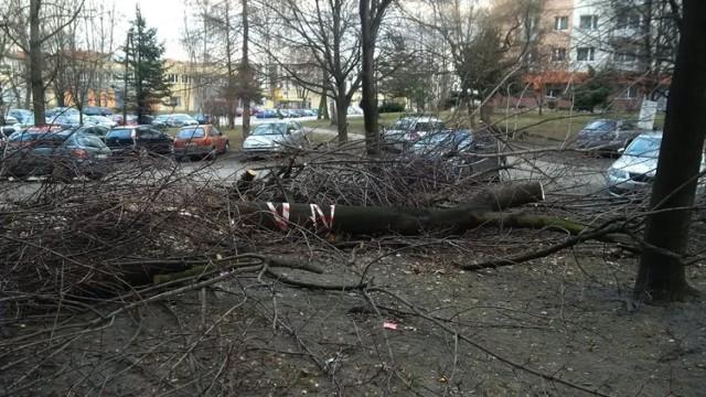 Wycinka drzew na osiedlu Paderewskiego w Katowicach