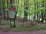 Gdzie na spacer w powiecie gdańskim. Wiosenne spacery, przejażdżki rowerem z widokami |ZDJĘCIA